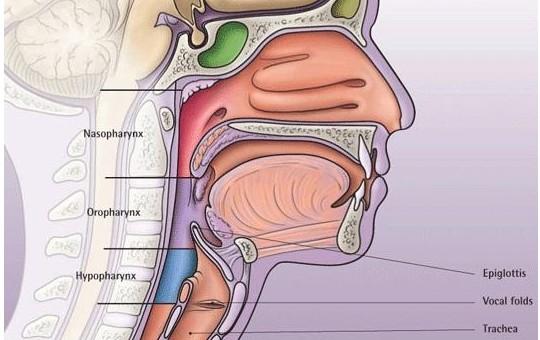 咽部、喉部