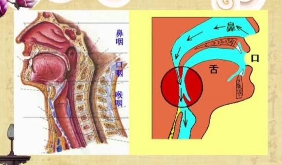 肿大的腺样体位置图