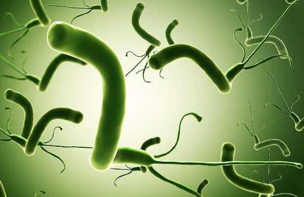 卫之幽益生菌粉可以根治幽门螺旋杆菌(HP)吗?