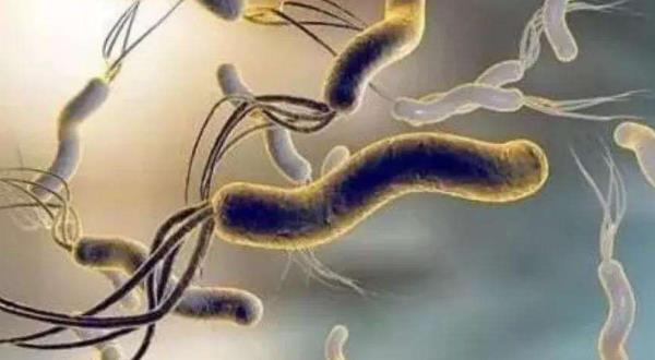 中医怎样治幽门螺杆菌?一文读懂!