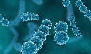 交通性鞘膜积液的症状有哪些