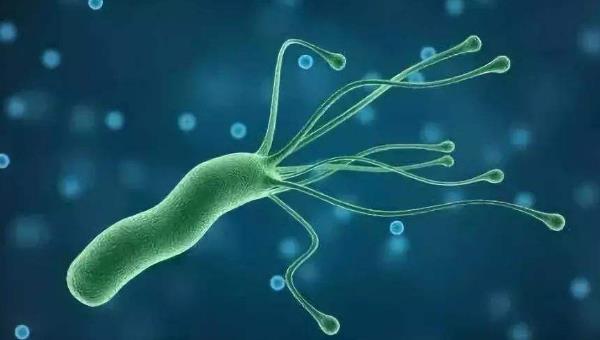 感染幽门螺杆菌体重暴瘦